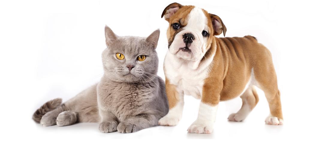 comparatif assurance animaux choisir la meilleure mutuelle. Black Bedroom Furniture Sets. Home Design Ideas