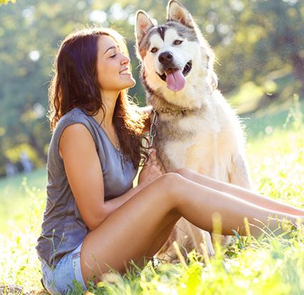 mutuelle pour chien